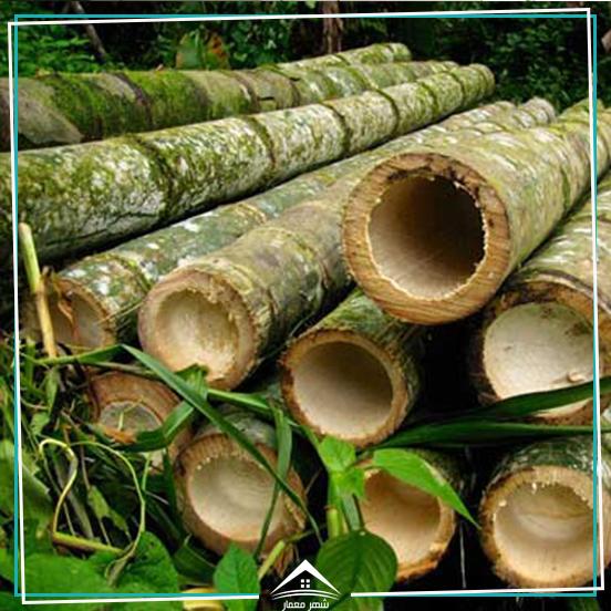 5. چوب بامبو (Bamboo) محکم ترین ماده ساختمانی